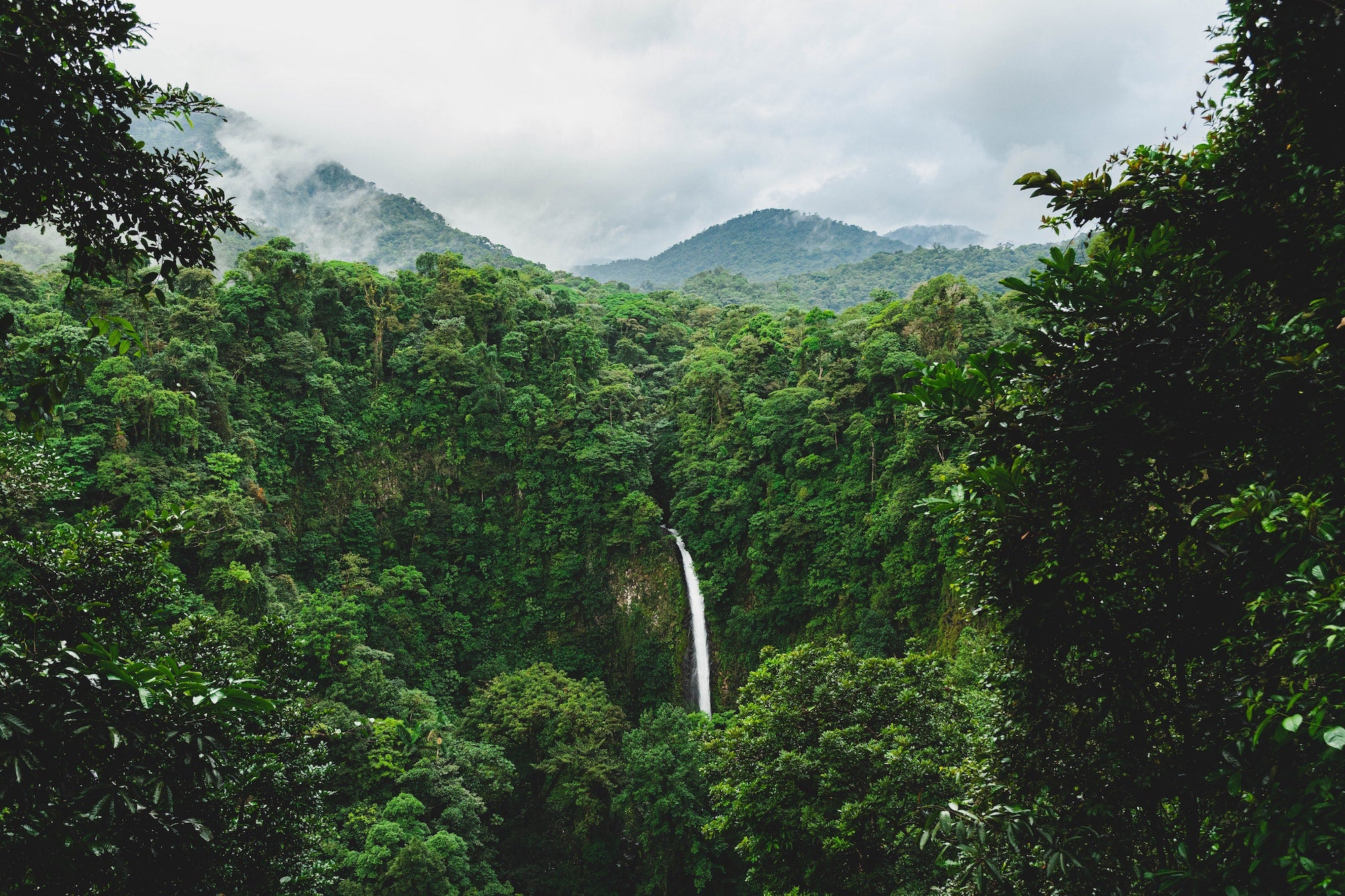 South American Rainforest - Photo by Etienne Delorieux on Unsplash