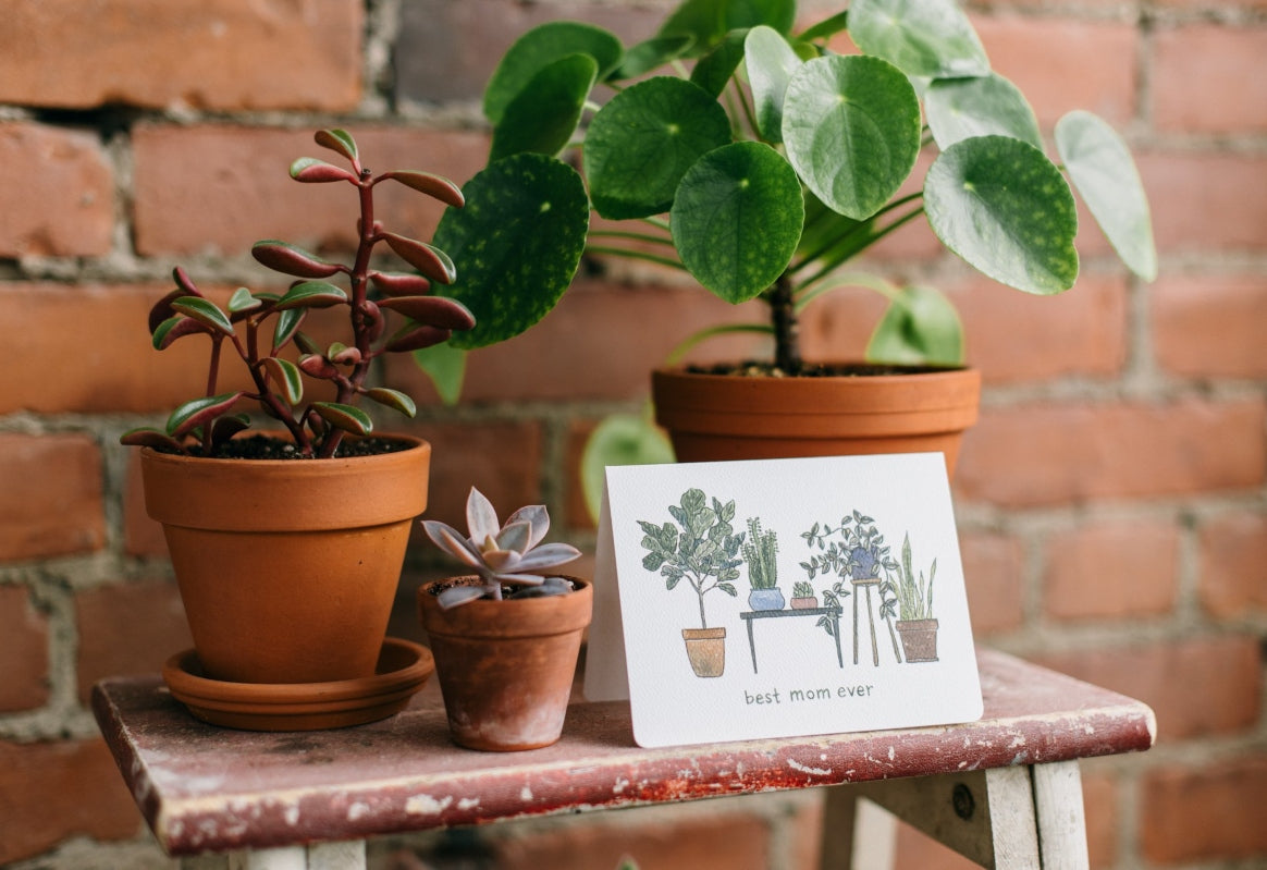 Mother's day card by Gotamago sits in front of green plants and a brick wall