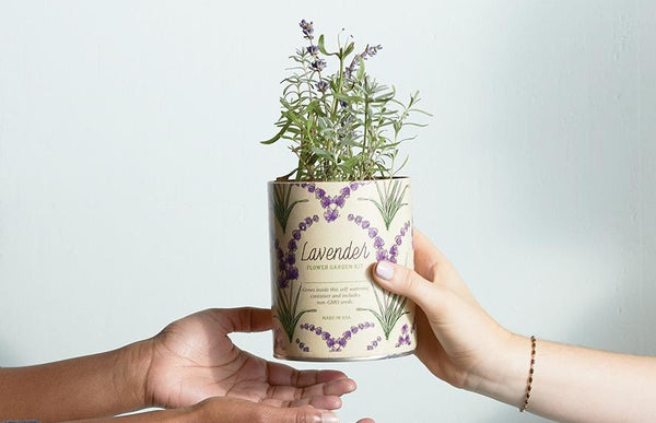Waxed planter with bright green and purple lavender sprouting out of the top being handed from one hand to another