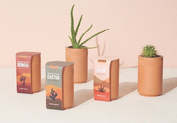 Modern Sprout's clay pot succulent series on a pink backdrop