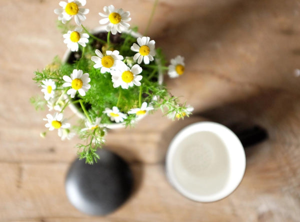 Chamomile plant with blooms sits in the sun with a cup of hot water in a dark grey ceramic mug to the side