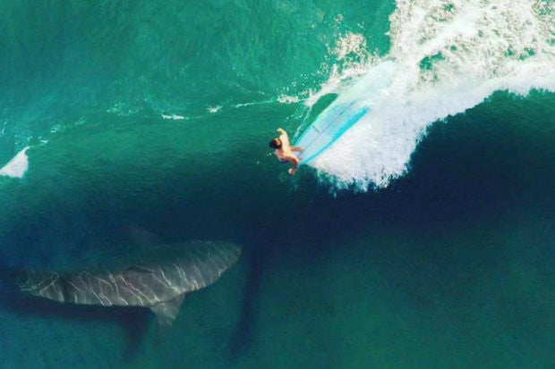 10 Incredible True Shark Attack Stories