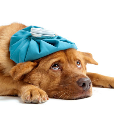 Brush Up On Basics for Pet First Aid Awareness Month