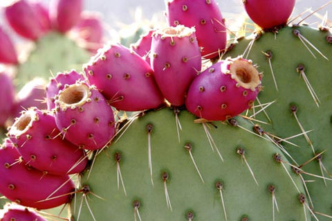 cactus juice - mymedic - medic - first aid kit - trauma kit - best first aid kit