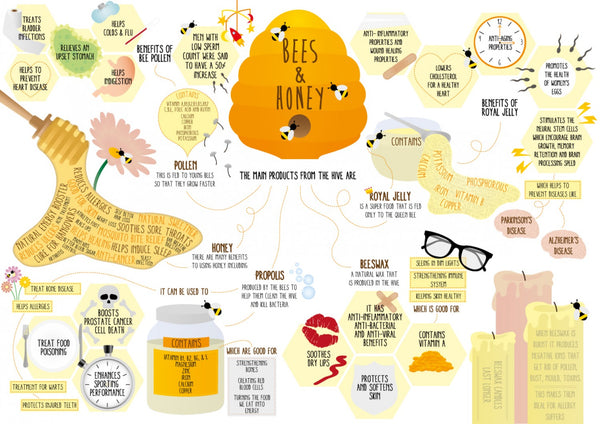 Bees and Honey Infographic