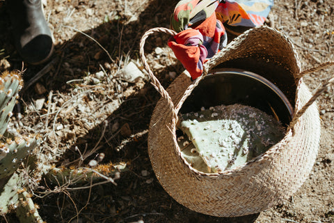 A basket with a scarf tied around the handle filled with a few prickly pear cactus paddles