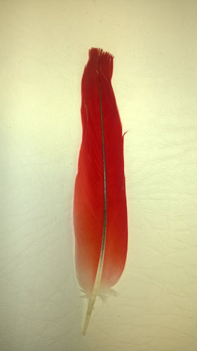 Red Parrot Feather - Ikodide-Loro