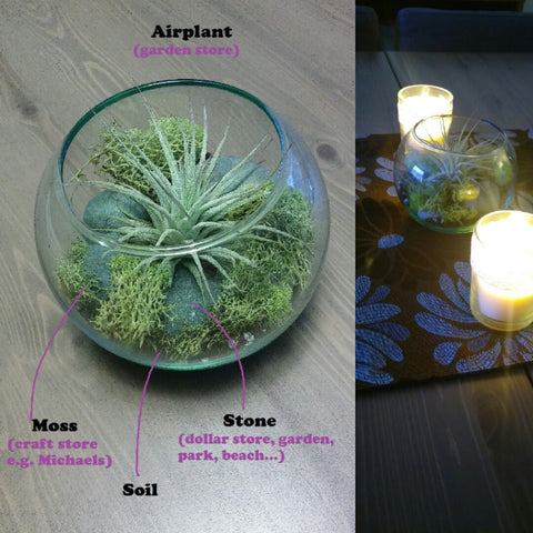 DIY air plant centrepiece