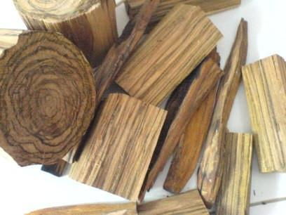 "Agarwood vs so-called ""white oud"" or buaya agarwood"