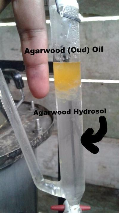 Oil Agarwood Hydrosol from Hydrodistillation Cultivated Oud - Product of Australia
