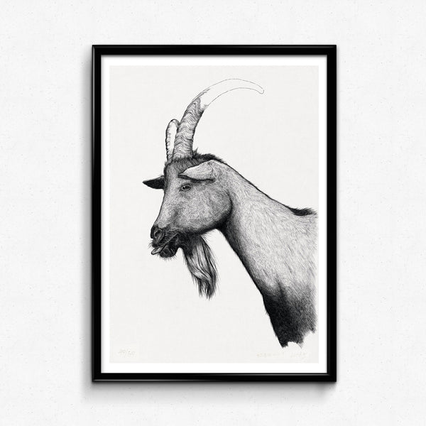 Animal Goat Detailed Drawing wing Print