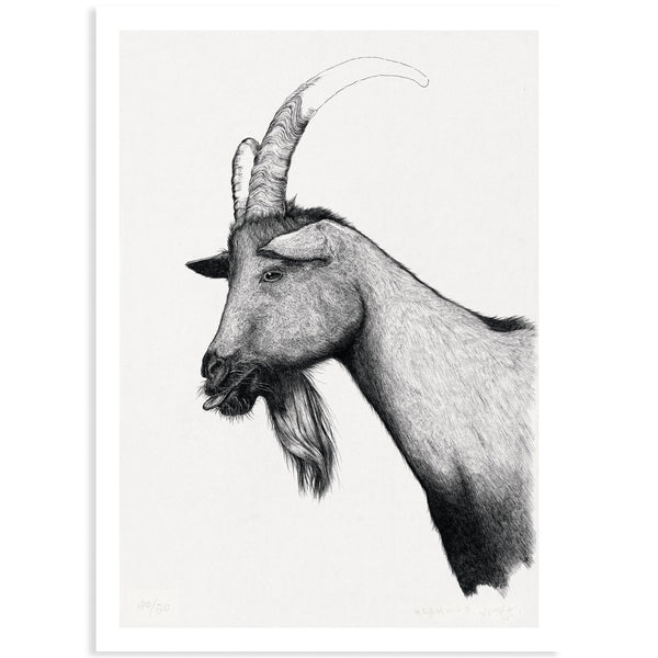 Animal Series Floating Zoo Art Print No.08 - The Goat Spit Out The Tongue - Print - Lavender Home London