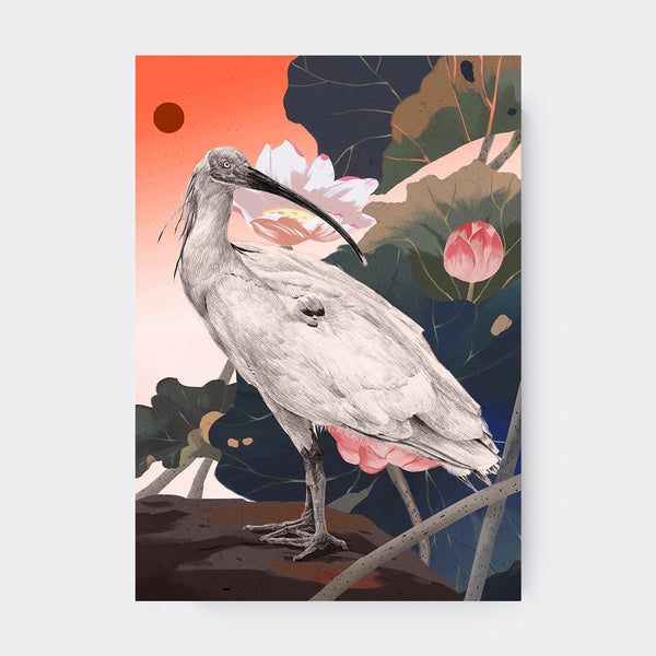 Endangered Animal Collection - Crested Ibis Bird Art Print - Print - Lavender Home London
