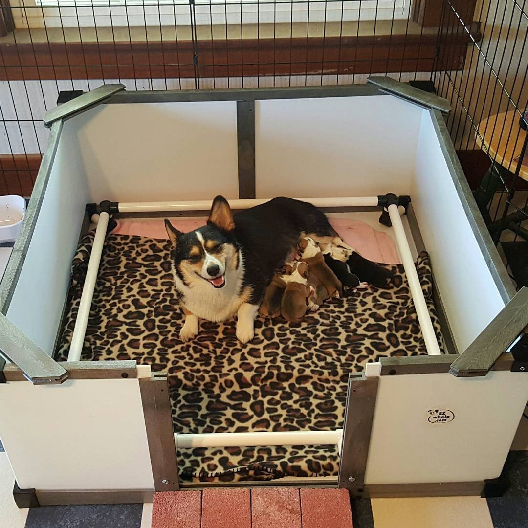 Whelping Boxes Breeding Supplies And Training Pads