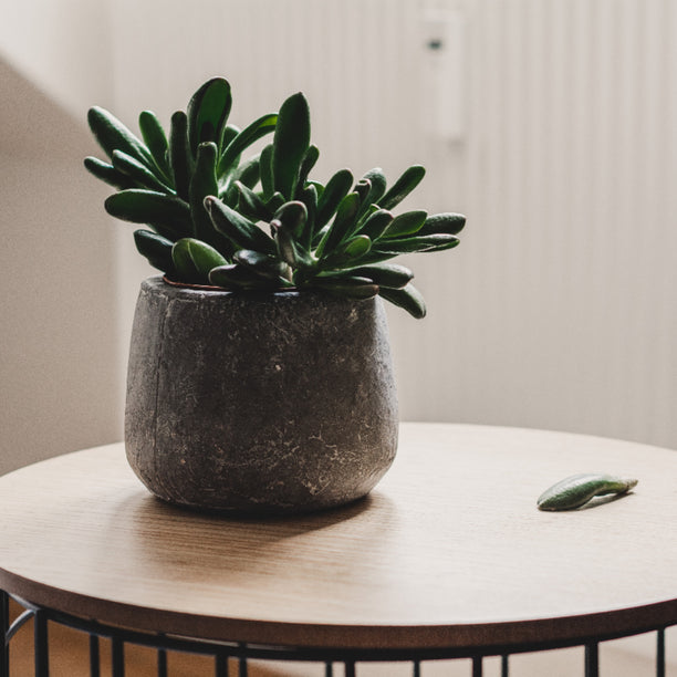 3 Houseplants To Keep Your Air Clean & Keep You Healthy