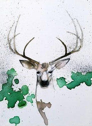 PRINT: Whitetail Deer