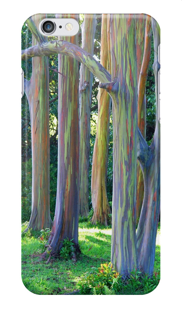 Rainbow Eucalyptus Trees iPhone Case