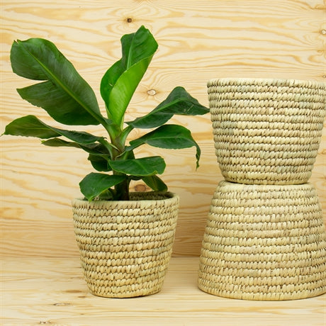 PALM POT OR BASKET L by Afroart