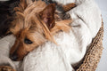 CUSHION FOR DOGGY BASKET (Medium) by Tikau PRE-ORDER