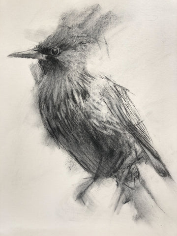 sketch of starling in charcoal