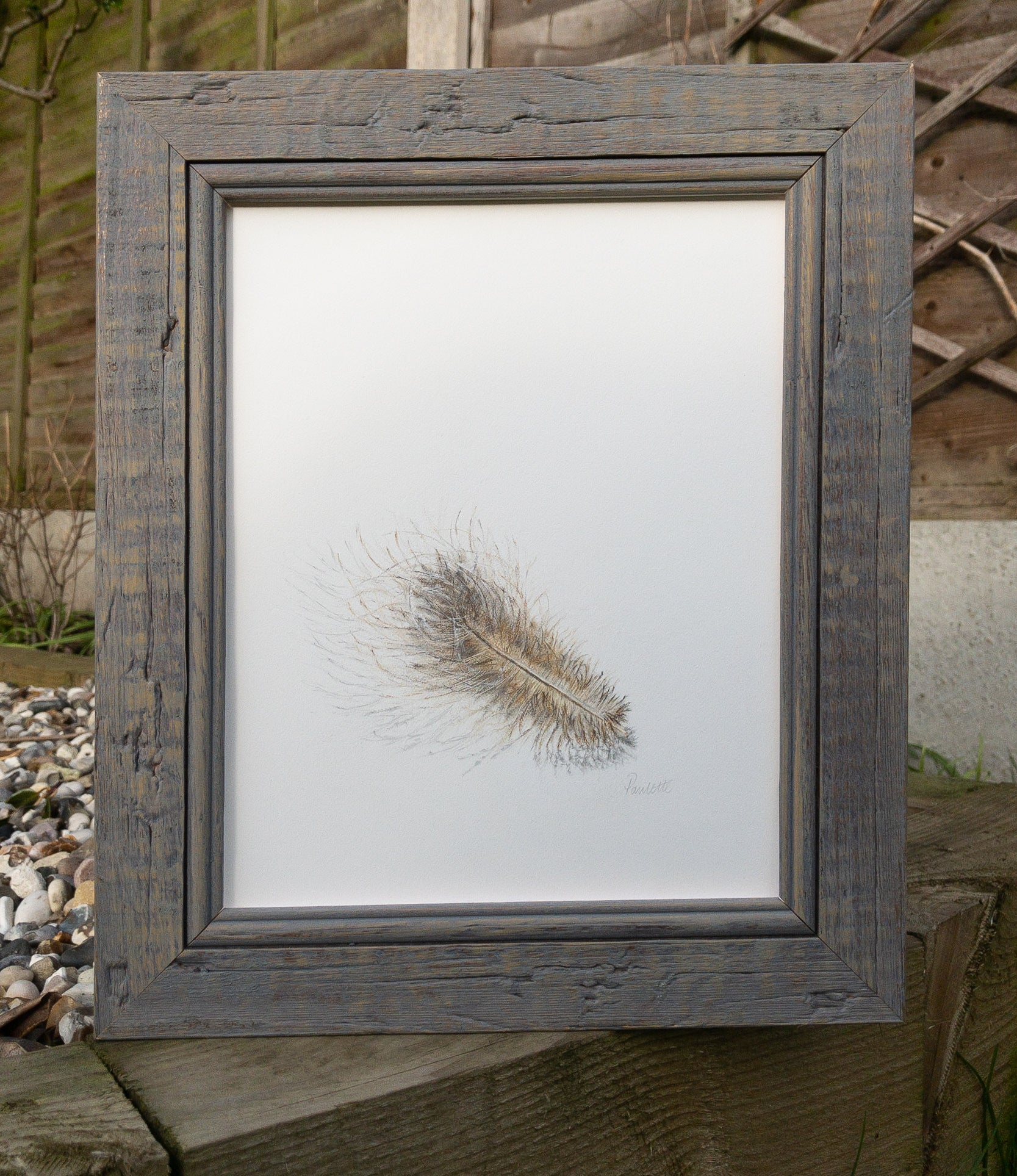 framed pencil drawing of buzzard feather