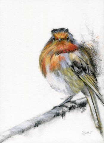 a charcoal and conte pastel on a robin with a fierce look sat on a branch