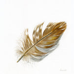 Buzzard Feather