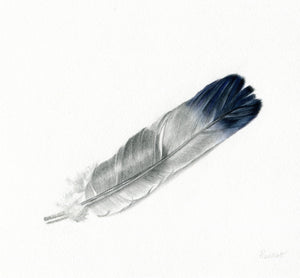 original mixed media drawing of a magpie's feather