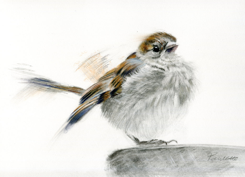 sparrow original charcoal and watercolour drawing