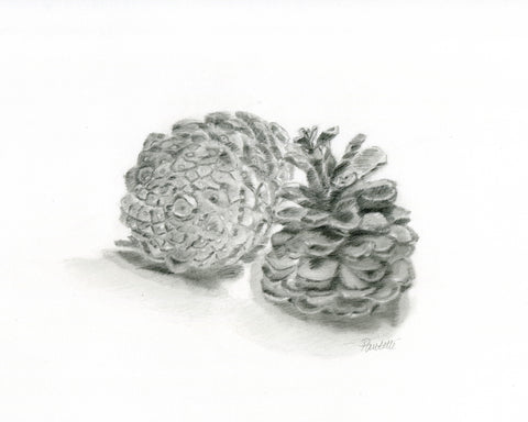 graphite drawing of pine cones drawn on bristol strathmore paper