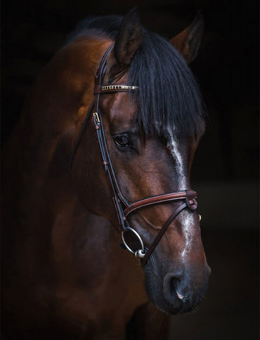 Jacson Cali Flash Bridle