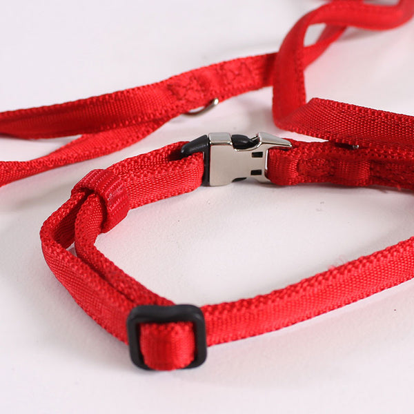 Dog Leash & Collar Pongo