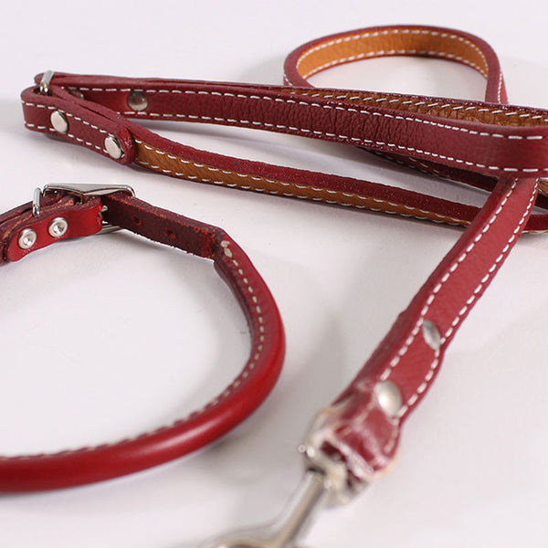 Dog Leash & Collar Roger