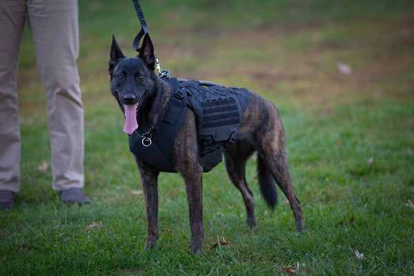 Titan Vest - Level 3A K-9 Body Armor