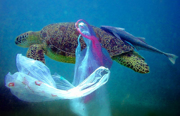 drawing of green turtle trying to swim with a grocery store plastic bag caught around its leg