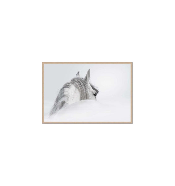 Silver Mare II Framed Print (with boarder)