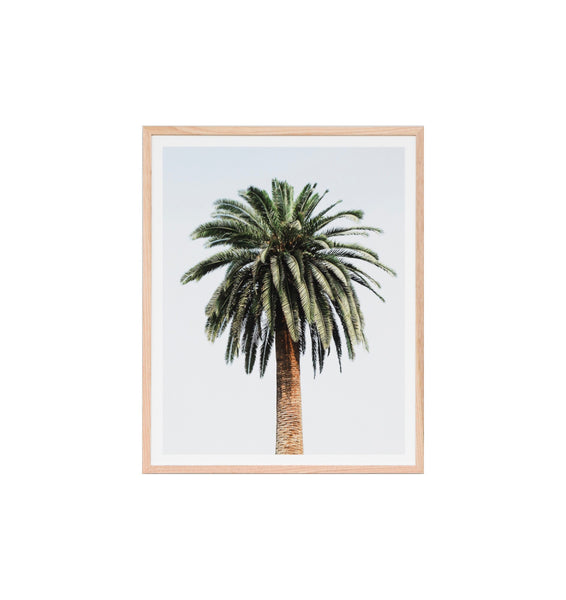 Caribbean Palm Framed Print
