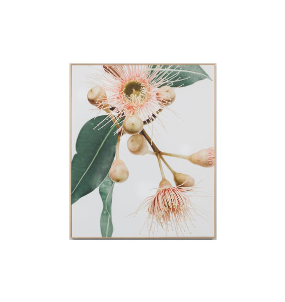 Eucalyptus Flower 1 Canvas Framed Print