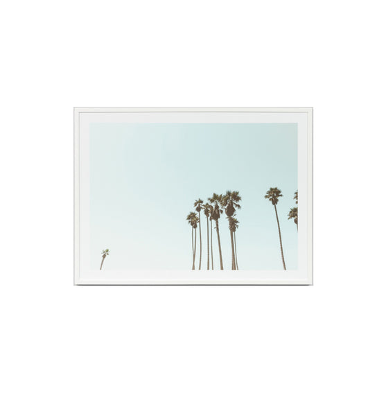 Palm Sky Blue Framed Print