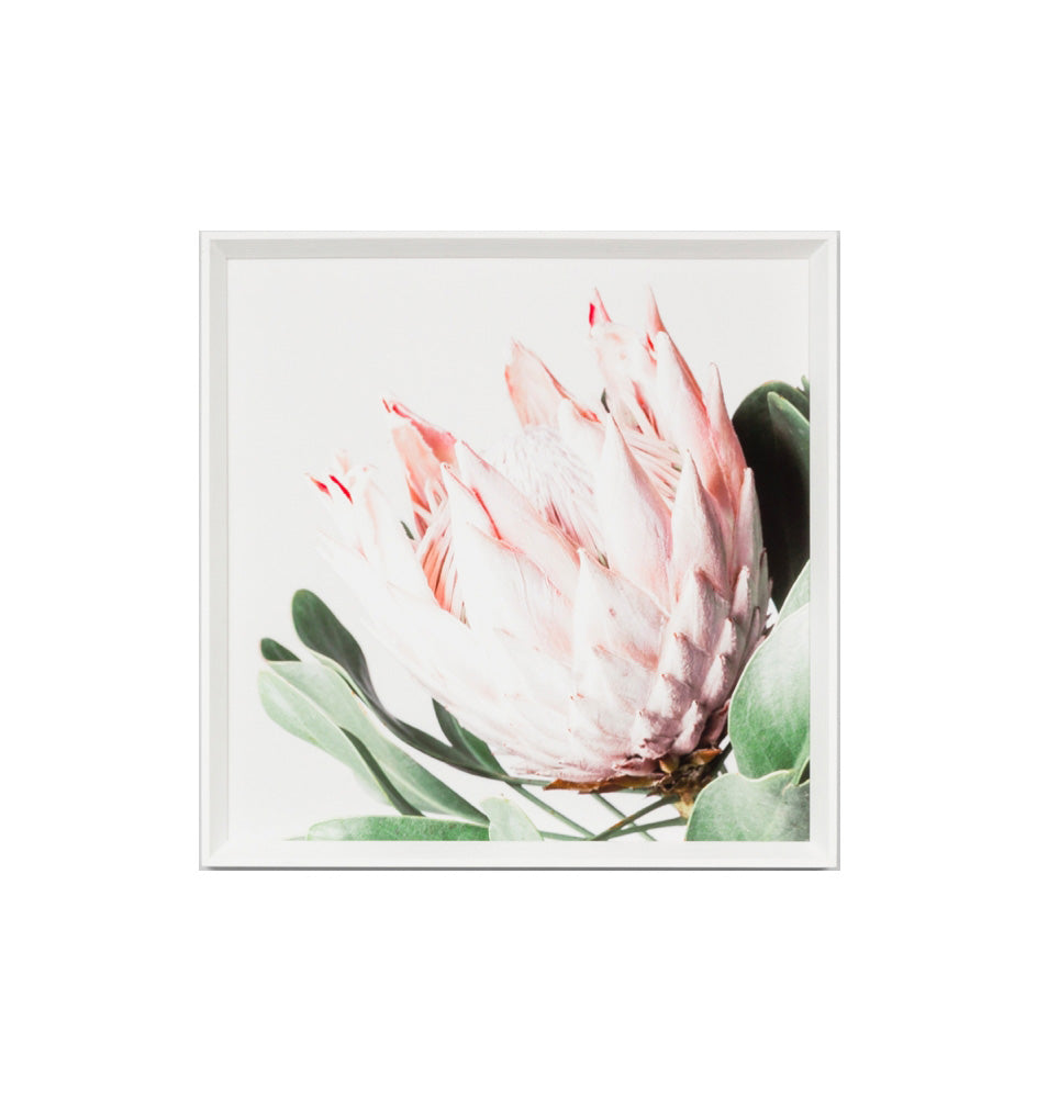 Pink Bloom 1 Framed Print