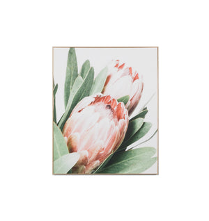 Protea Canvas Canvas Framed Print