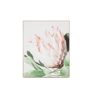 Protea Flower Canvas Framed Print