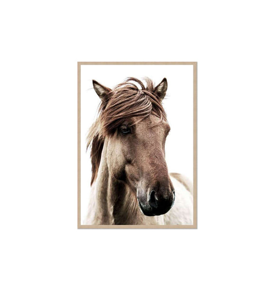 Brown Mare Framed Print