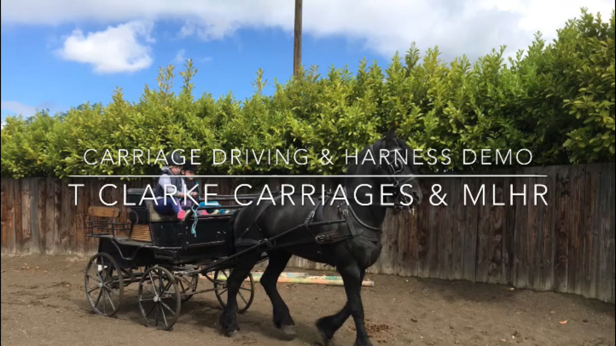 MLHR Attend Carriage Driving & Harnessing Demo