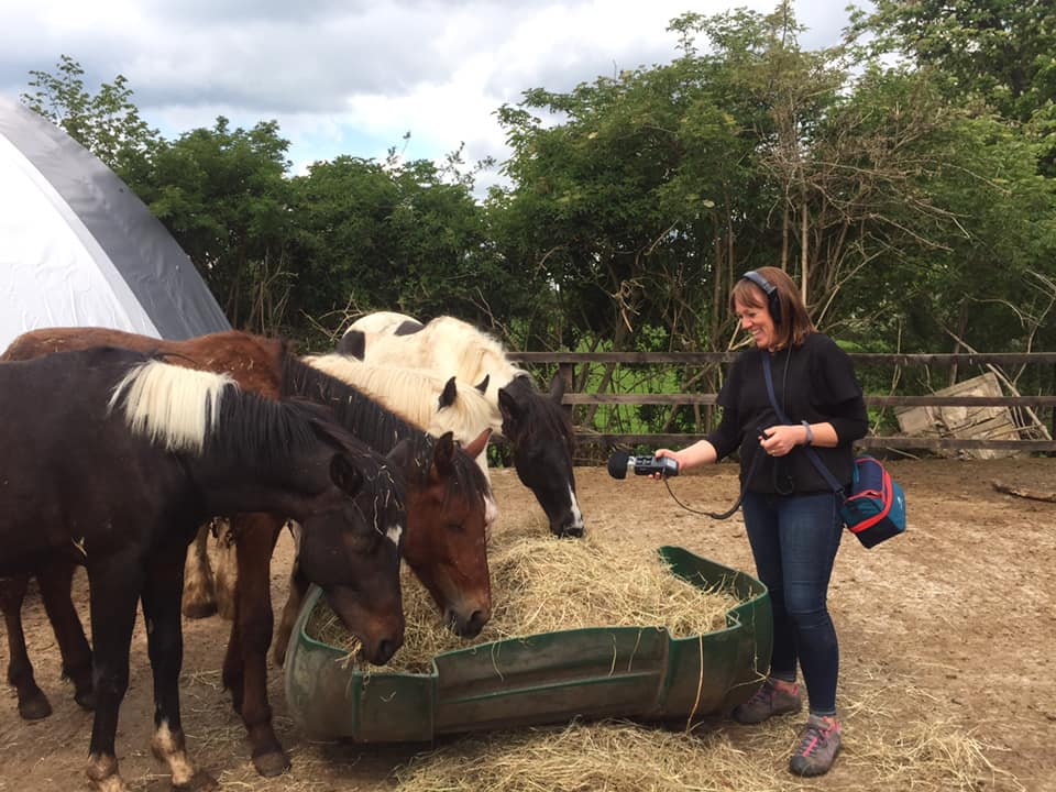 RTÉ Radio 1 comes to My Lovely Horse Rescue