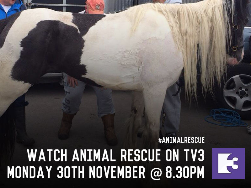 Watch MLHR on Animal Rescue - TV3 - 30th November 2015 @ 8.30pm