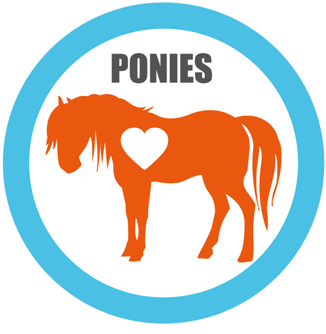Ponies for Adoption