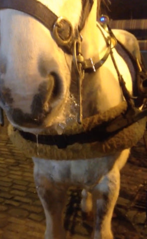 Dehydrated horse in Temple Bar