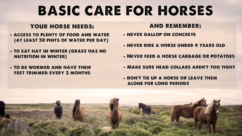 Horse Welfare Guide