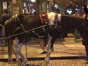 Seized Dublin Carriage Horse - Seán